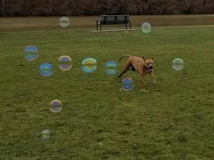 Did someone say Bubbles?