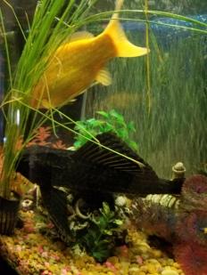 A Fishy Love Story